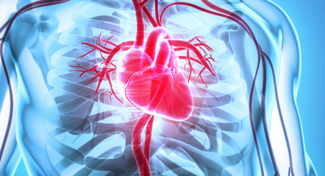 Abstract 119: Cardioprotective Effects of Whole Body Periodic Acceleration (pGz) on Hypoxia-Induced Injury of Cardiac Myocytes | Circulation