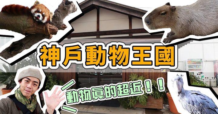 神戶動物王國!動物超近距離接觸!來神戶必逛動物園!有水豚、鯨頭鸛、樹懶這些可愛動物,來這裡絕對不會後悔~日本神戶旅遊Vlog~ 【2019日本關西】 家庭兄弟